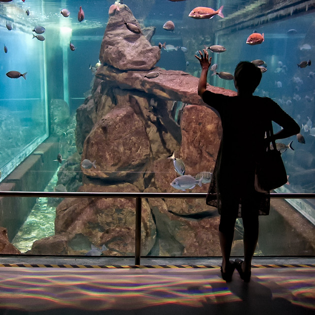 L'Aquarium de Livourne